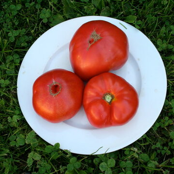 Tomates - Brandywine Off The Vine