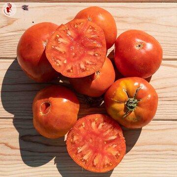 Tomates - Ponderosa Red
