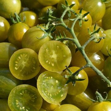 Tomates-Cerises - Verde Claro