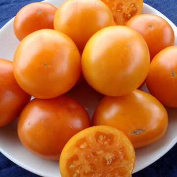 Tomates - Orange Queen