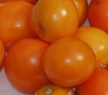 Tomates - Orange Bourgois