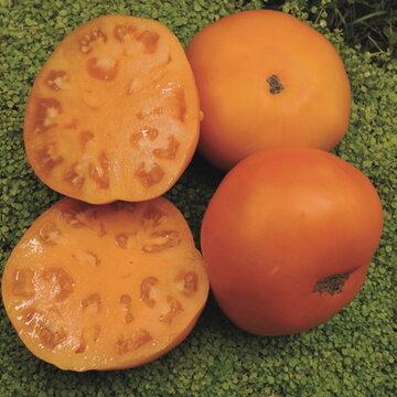 Tomates - Persimmon