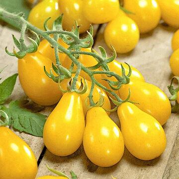 Tomates-Cerises - Poire Jaune