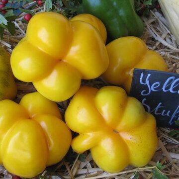 Tomates - Jaune à Farcir