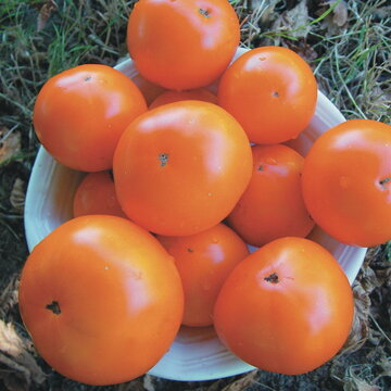 Tomates - Russian Persimmon