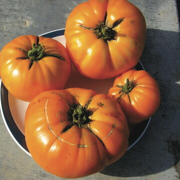 Tomates - Tangerine