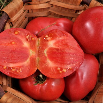 Tomates - Anna Russian
