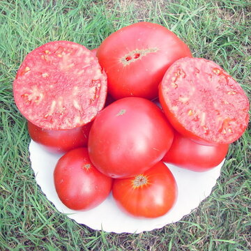 Tomates - Brandywine Pink