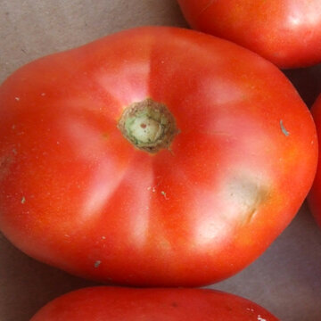 Tomates - June Pink