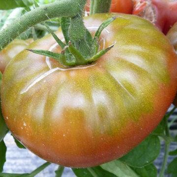 Tomates - Micado Violettor