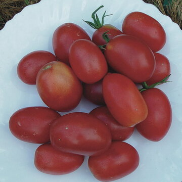 Tomates - Olirose de St Domingue