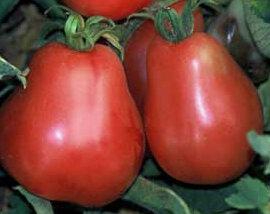 Tomates - Ukrainian Pear