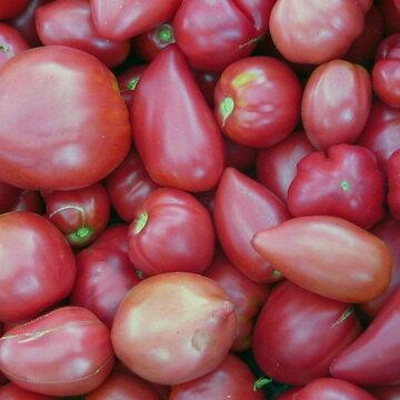 Tomates - Cœur de Bœuf Russe
