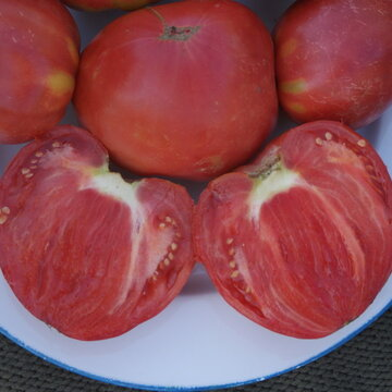 Tomates - Cœur de Bœuf Slankard
