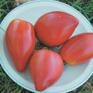 Tomates - Cœur de Bœuf Sweet Heart