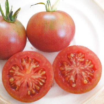 Tomates - Selma