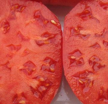 Tomates - Crnkovic Yougoslavian Pink
