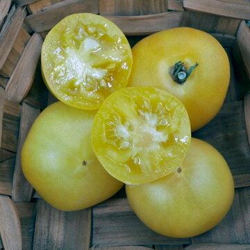 Tomates - Douce de Picardie
