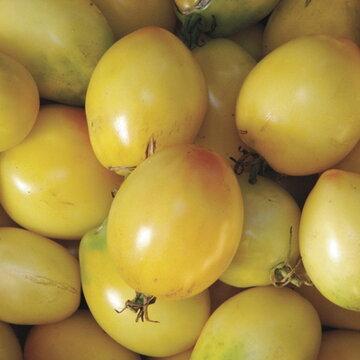 Tomates - Ivory Egg