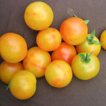 Tomates-Cerises - Marizol Gold Cherry