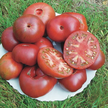 Tomates - Black From Tula