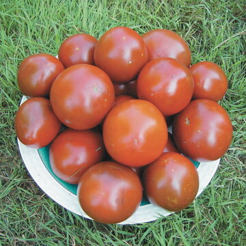Tomates - Black Sea Man