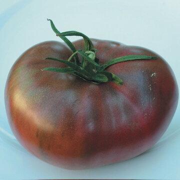 Tomates - Charbonneuse