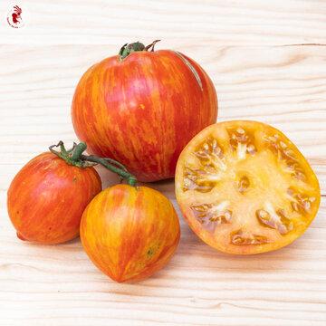 Tomates - Copia