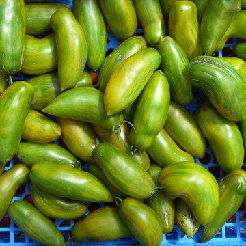 Tomates - Green Sausage