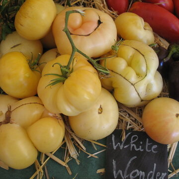 Tomates - White Wonder
