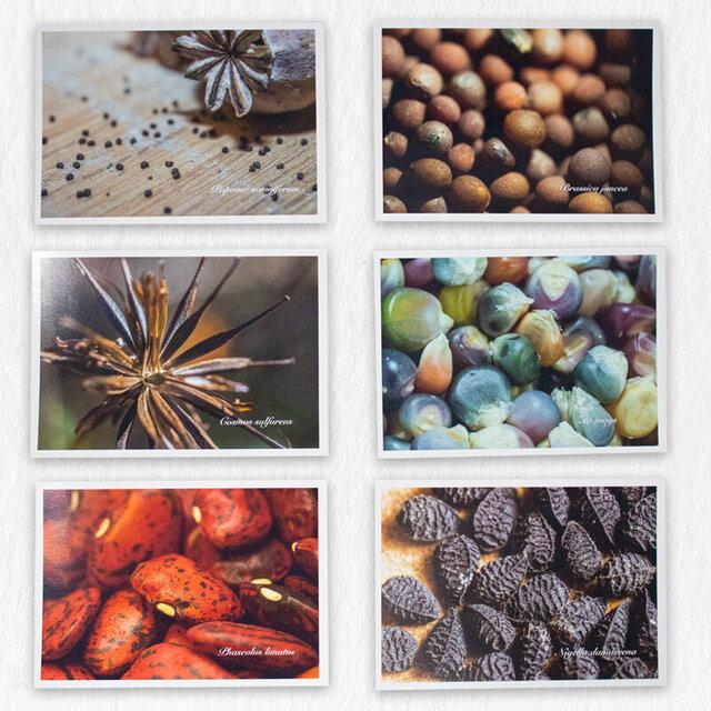 Cartes postales - Lot de 6 cartes postales Kokopelli