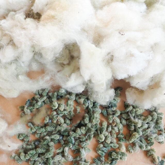 Cotons - Erlene's Green