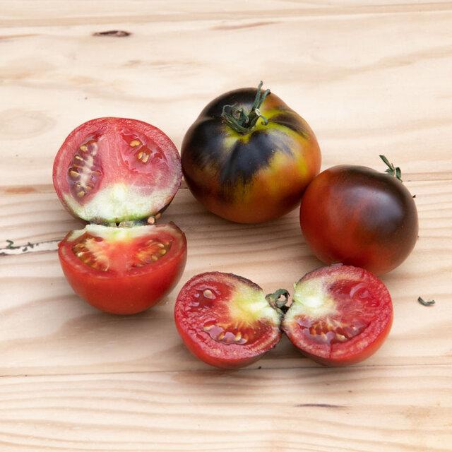 Tomates - Chestnut Chocolate