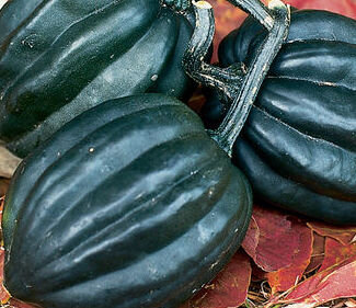 Courges Pepo - Tuffy