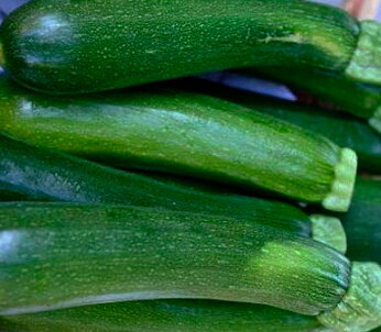 Courgettes - Verte de Milan / Black Beauty