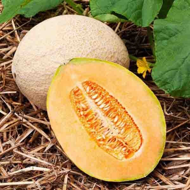 Melons - Hales Best Jumbo