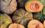 Melons - Oka du Québec