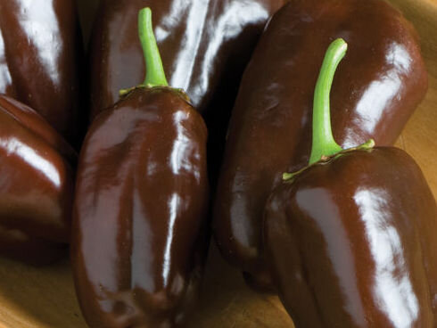 Piments/Poivrons - Georgescu Chocolate