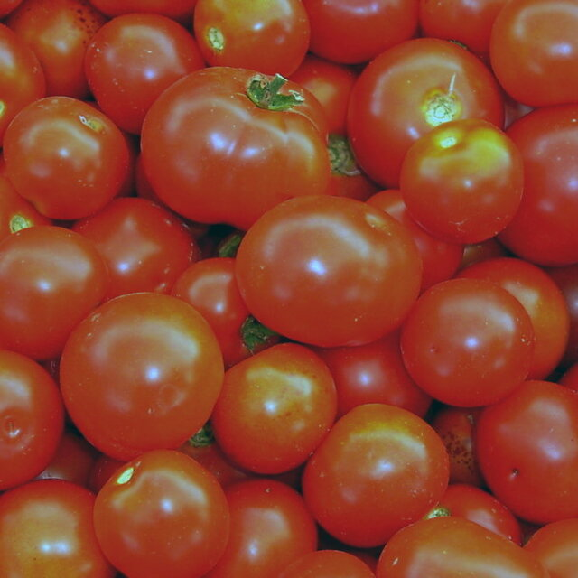 Tomates - Gem State