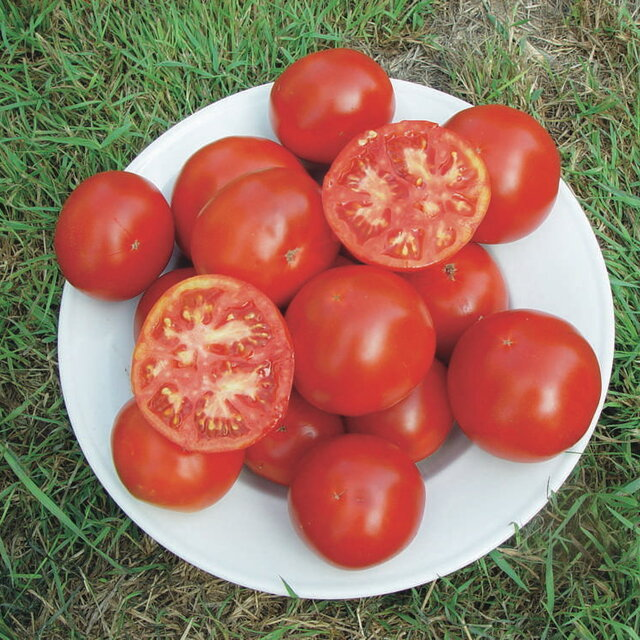 Tomates - Moscow
