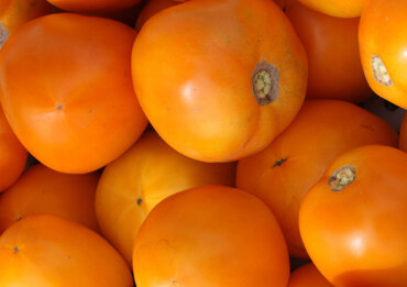 Tomates - Moonglow