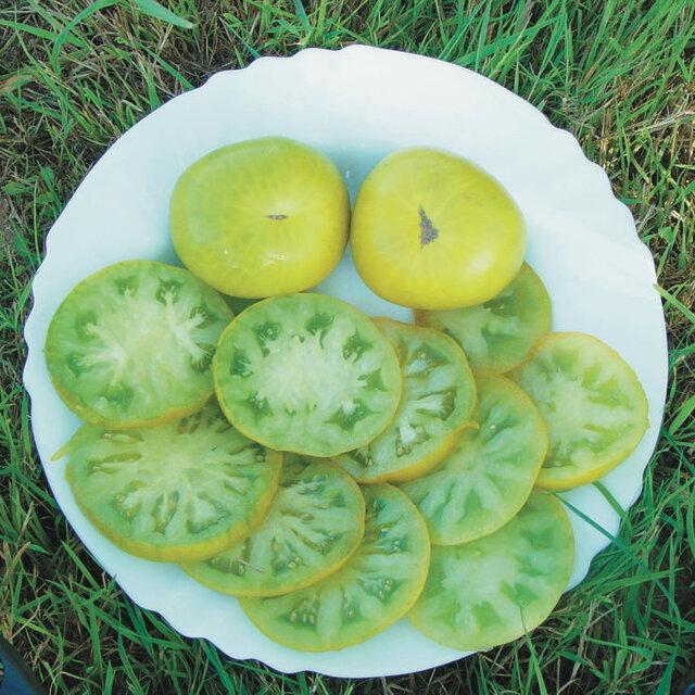 Tomates - Evergreen