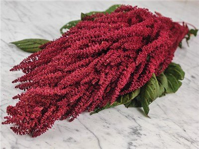 Amaranthes à Grains - Elena's Red