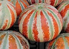 Melons - Kajari