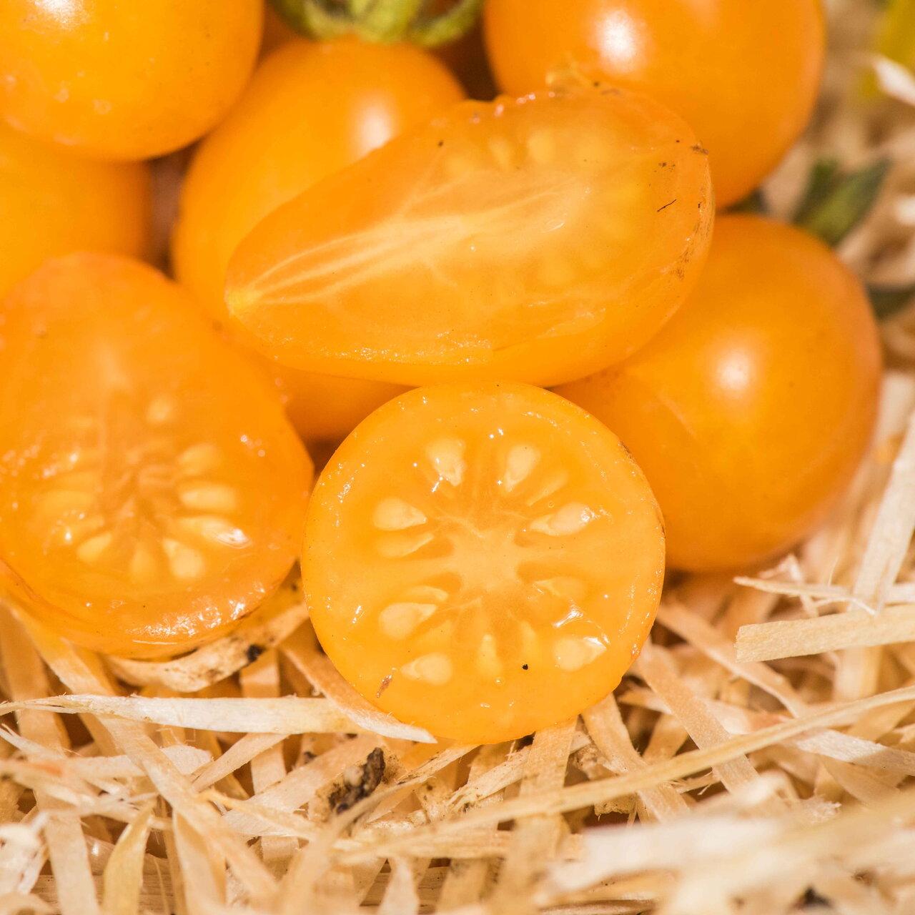 Tomates-Cerises - Tomate-Cerise Orange