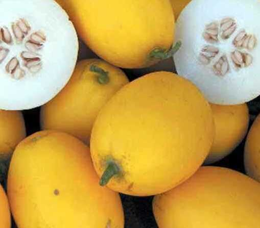 Melons - Mango