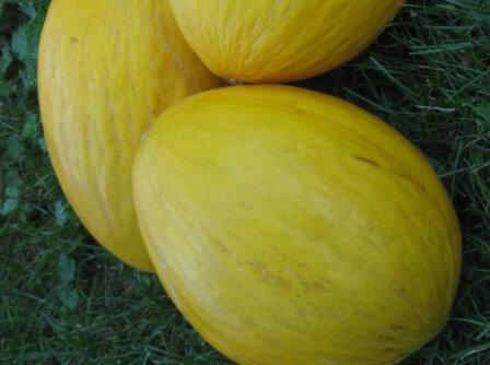 Melons - Crenshaw