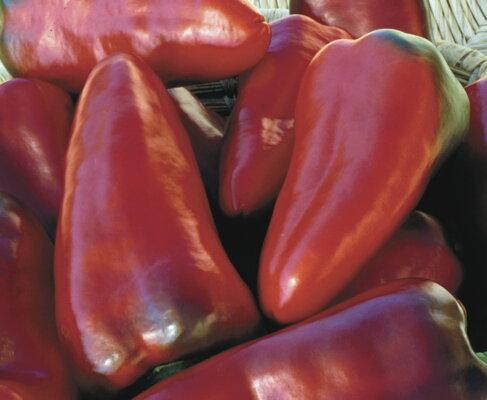 Piments/Poivrons - Tolli Sweet