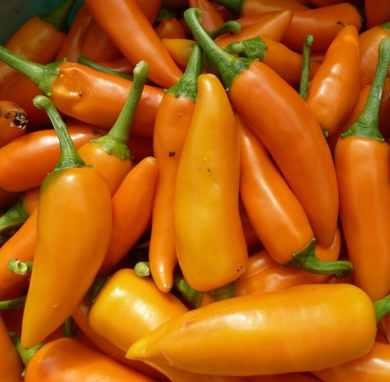 Piments/Poivrons - Bulgarian Carrot