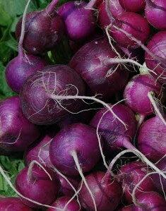 Radis - Purple Plum
